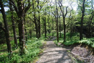 Strone Hill Woods